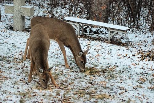 2018-11-11.deer1