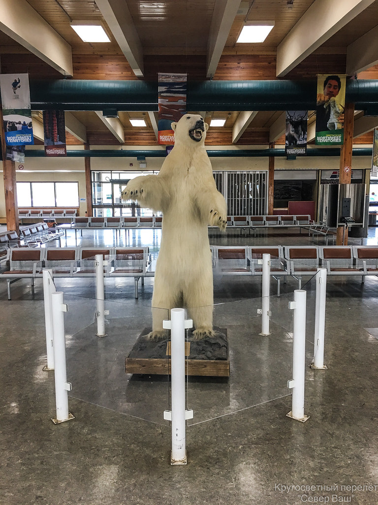 Чучело белого медведя в зале ожидания аэропорта Инувик