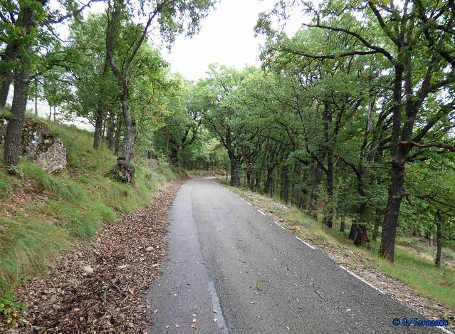 Solsonès 18 -03- Veinats de Guixers i Valls -04- Pista por el bosque de robles