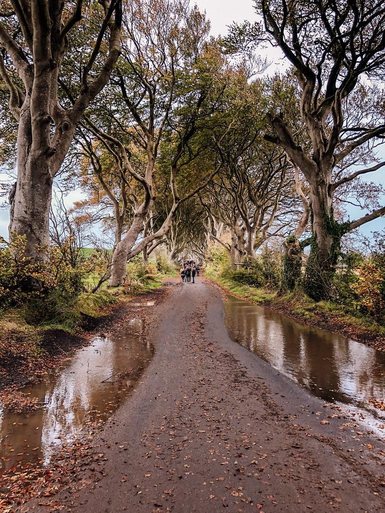 Dark Hedges   Ireland and Scotland Itinerary