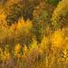 Hemington Autumn