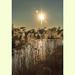 Wicken Fen in Cambridgeshire by fenman_1950