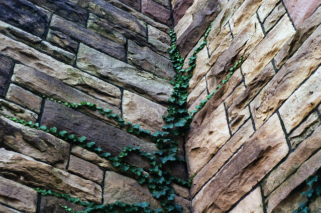 vine and bricks
