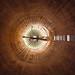 • Antennaria by Woven Eye