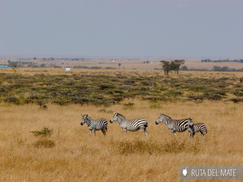 Guia para viajar a Kenia y Tanzania P1100083