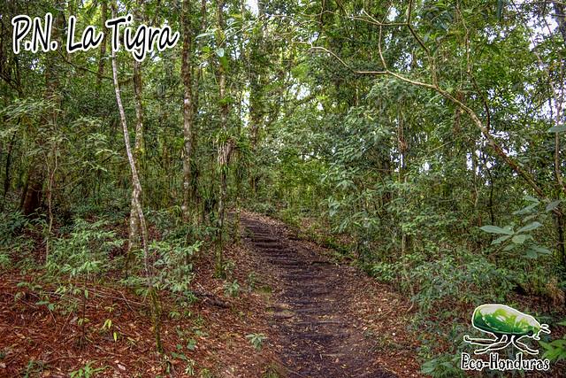 tigra3