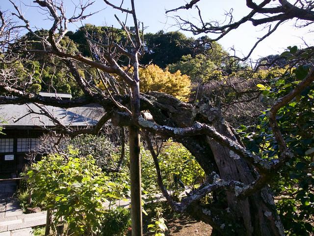 058-Japan-Kamakura