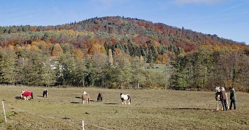 Alison's Horses