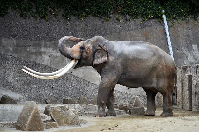 金沢動物園20190126
