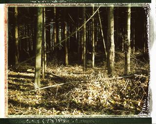 My forest (Jalhay, Belgium)