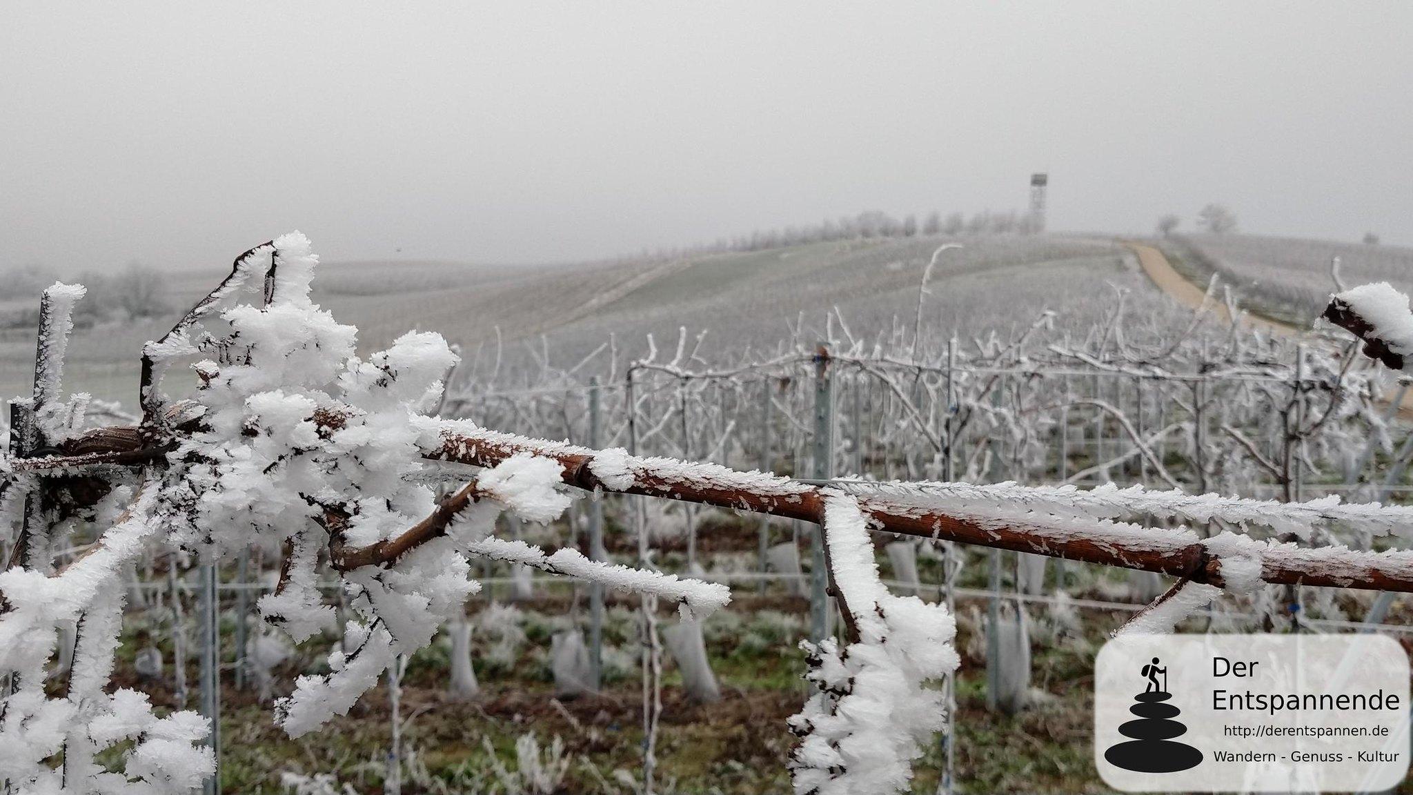 Raureif im winterlichen Rheinhessen