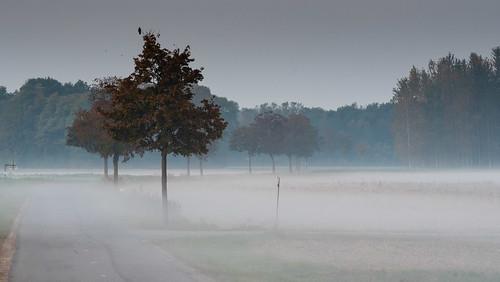 brume du petit matin - plaine du ride