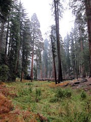 Meadow in Sequoia National Park