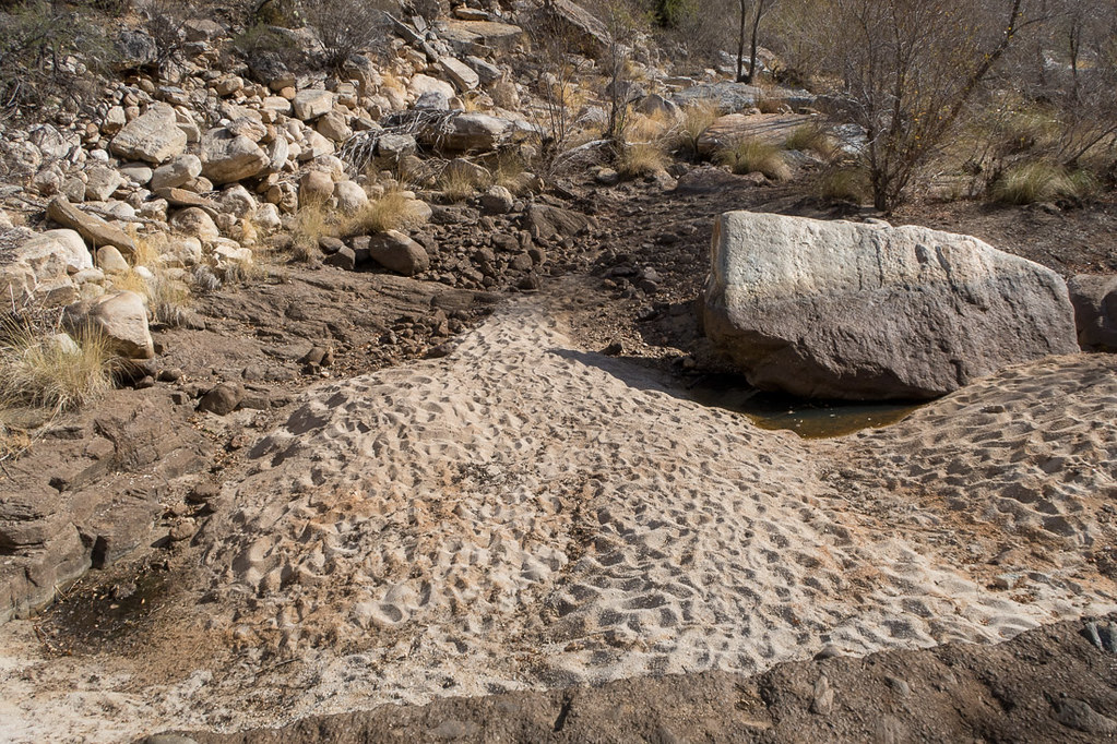 Dry riverbed in Sabino Canyon