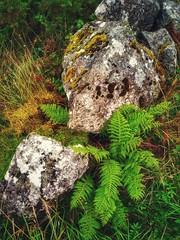 Stone and Fern #WalkingConnemara