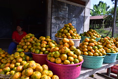 I asked my guide if I should buy him a basket of the fruit for a temple ceremony he had invited me to that evening