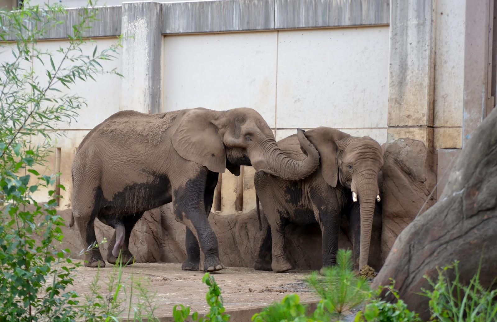 盛岡市動物公園 20150811