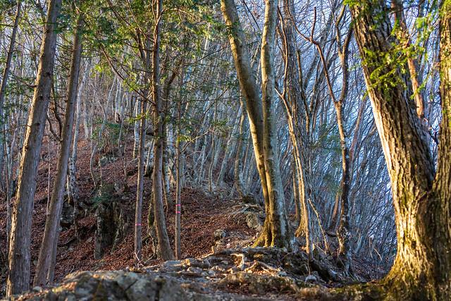 ヌカザス山直下はルート一番の急登