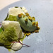 Avocado, pistachio, yogurt snow