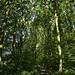 Notton Wood Nature Reserve (107)