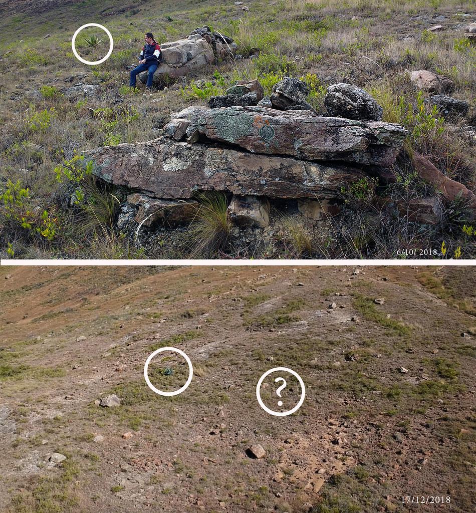 Drone-shot-Comparison