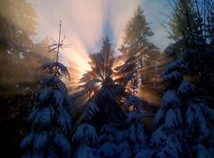 Sunbeams in the fog