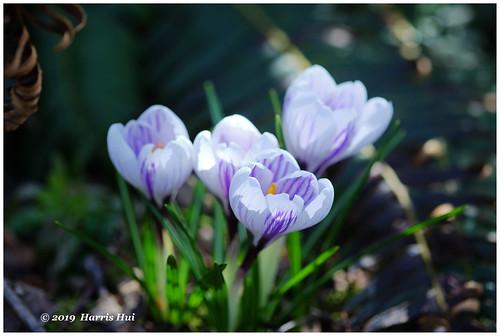 Restored The Color Of Spring - Calderwood XT6586e
