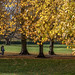 Bedington Park