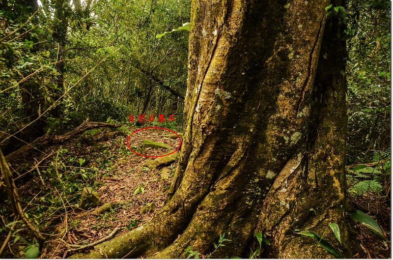 三縣界山冠字補山(31)山字自然石森林三角點點位