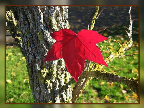 A leaf dances in the wind joyful goodbye