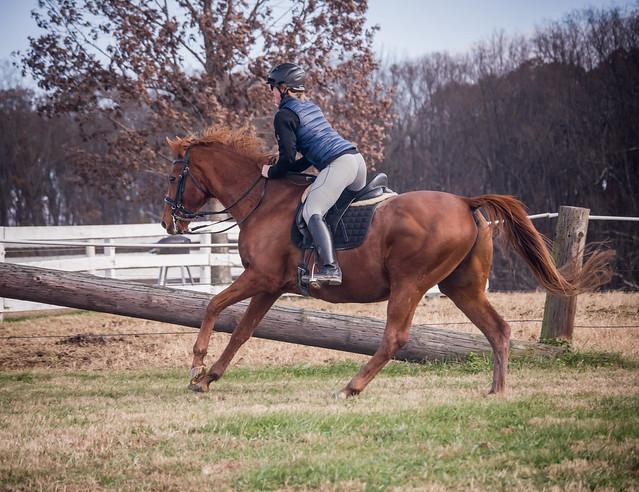 20181116 Austen's Ponies_43