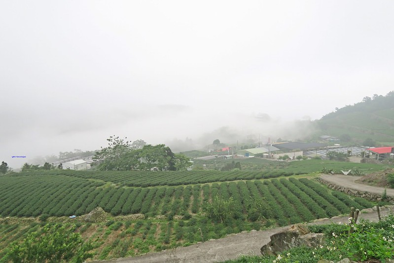 travel-ShiDing-Chiayi-sunrise-17docintaipei (11)