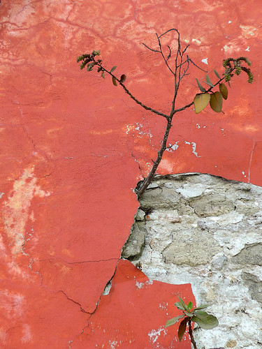 Puebla, Mexico: an abstract created by textures of paint and plaster on a orange wall