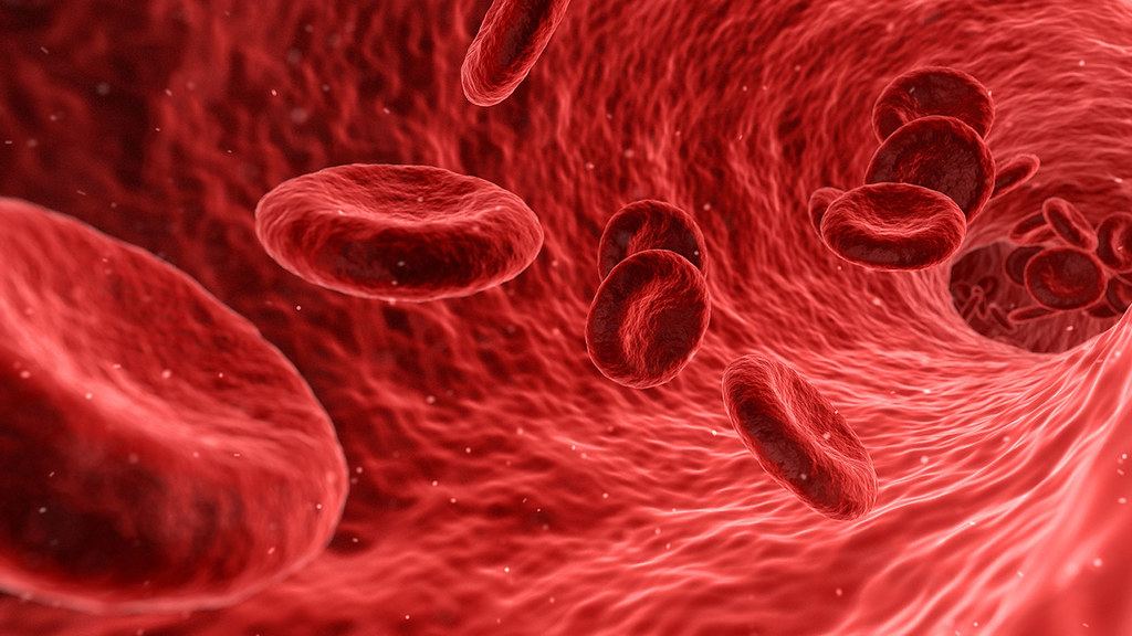 Computer graphic showing red blood cells in the body