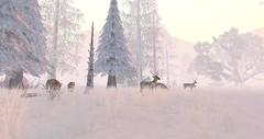 Firestorm Forest