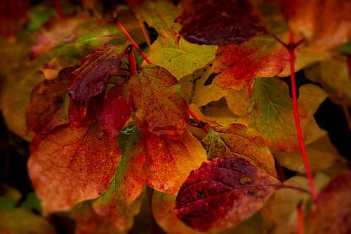 Rain on Autumn Leaves