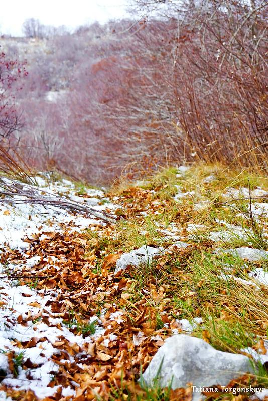 Дорожка,  усыпанная буковыми листьями