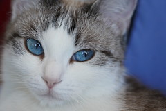 Chats / Yeux de chat / Cat's Eyes / Cats