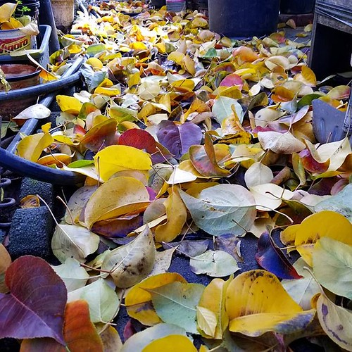 Lots of leave to take up. #leaves #fall #autumn #leaf