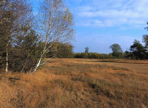 Nature area near Lievelde - Achterhoek
