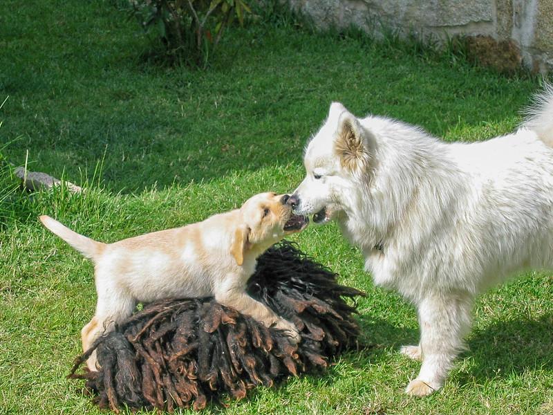 Fotos de animales de todo tipo incluyendo mascotas que más te gustan - Página 14 45591625644_1b94156506_c