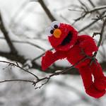 Elmo Wonderland
