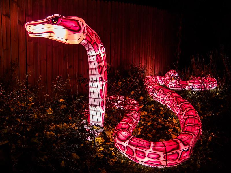 Espèces en voie d'illumination : Le crocodile et le boa 46183732082_5e2354ddc1_c