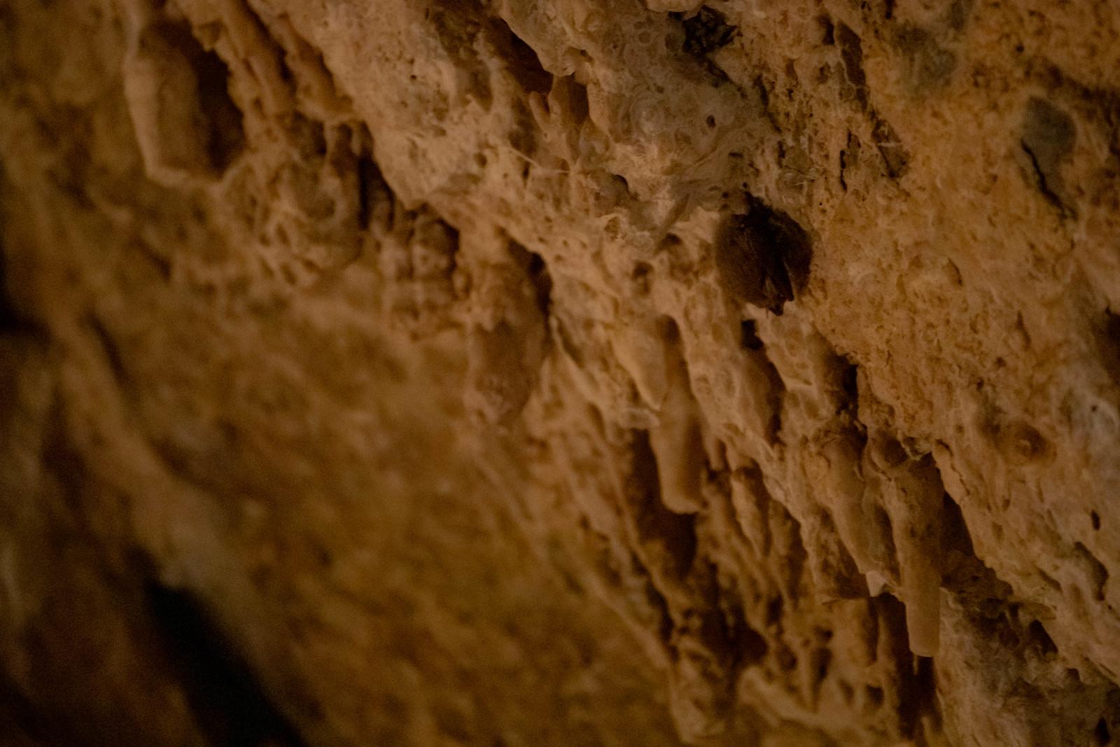 11.24. Mitchell Caverns