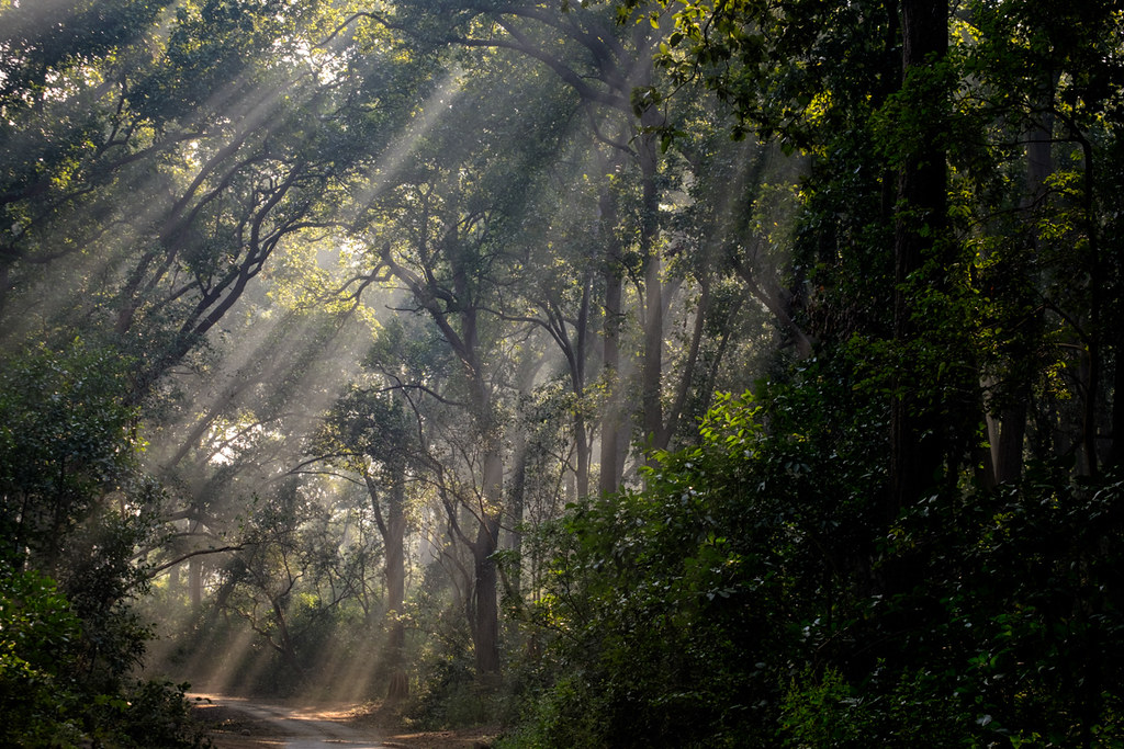 Light Into Darkness | Dhikala, Jim Corbett NP, India
