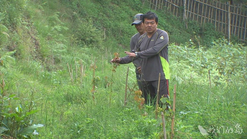 985-2- (50)林務局設立了7公頃的試驗區。