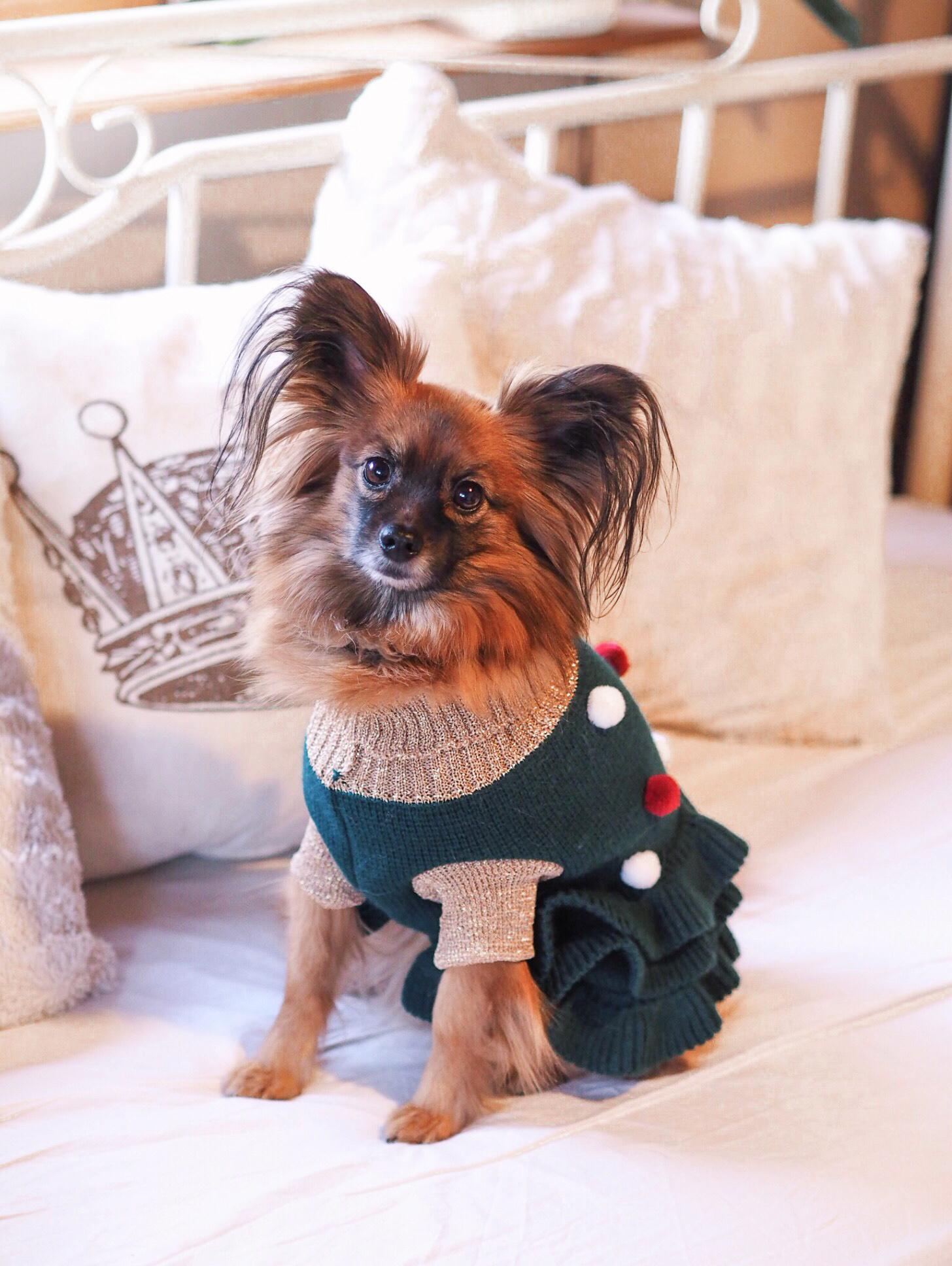Koiran jouluasu