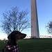 Harvey at Washington Monument
