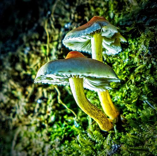 49/52 Contraluz: Las pequeñas del bosque