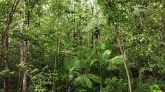 Guadeloupe - Parc des Mamelles